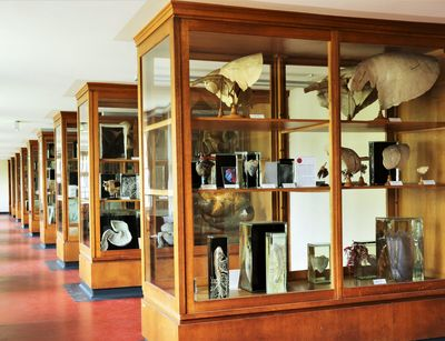 The Veterinary Anatomy Teaching Collection not only has a long tradition at the Institute, it also conveys knowledge, values and a feel-good atmosphere for students and all interested parties. Photo: Martina Fersterra